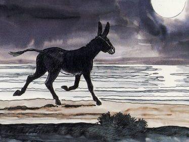 Esel am Meer 2
